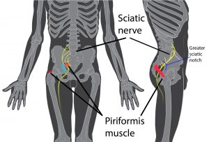 piriformis diagram